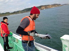 Sampling river and sea bed sediment with radioactive tracers from Fukushima
