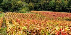 Vignobles région de Beaune