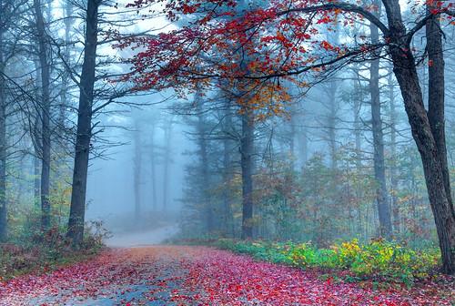 road autumn trees mist fall fog newengland newhampshire fallfoliage foliage scenicroad