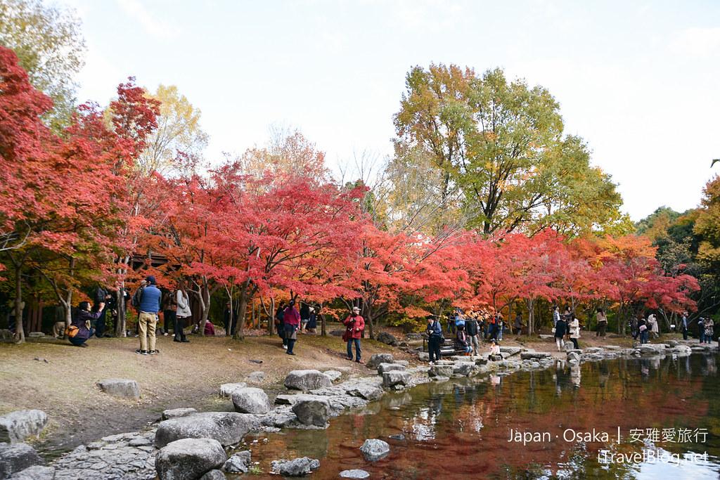 《大阪赏枫景点》万博纪念公园【下】:搭乘游园车前往红叶溪.日本庭园的森林空中步道。