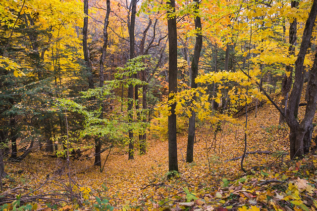 Woods, Autumn, Fall, Foliage, Colors, Trees, Leaves