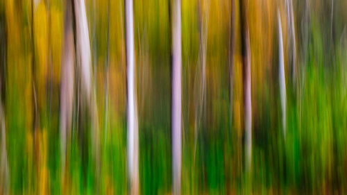 trees abstract motion blur washington pacificnorthwest streaks canoneos5dmarkiii sigma35mmf14dghsmart