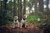 The Beagles | Dog Photography Bedfordshire