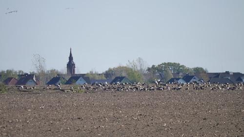 Vögel vor Ragow