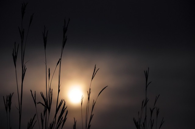 Christiaan Legan - the moodiness of autumn
