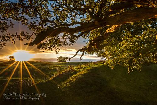 morning light wales sunrise canon landscape photography shadows branches scenic lensflare stunning oaktree midwales montgomeryshire offasdyke welshborder shropshireborder