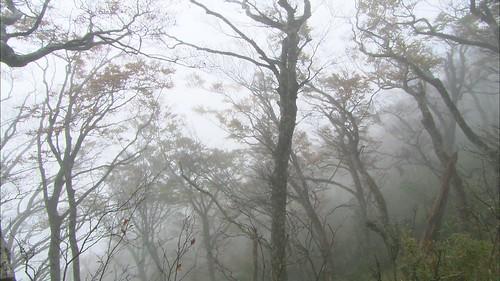 海拔最低位置最東的台灣水青岡