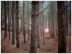 forestlightAngie
