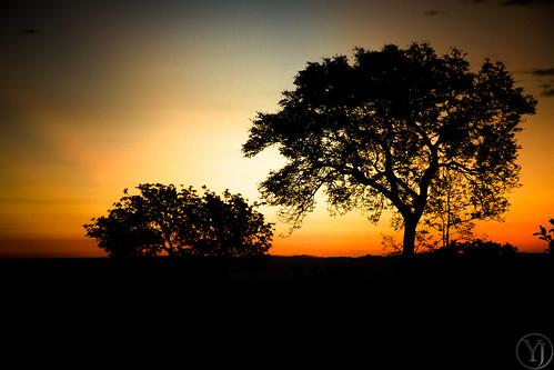 africa park trees light sunset red sun color tree silhouette southafrica bush looking african south safari coucherdesoleil krugerpark kruger afrique savane