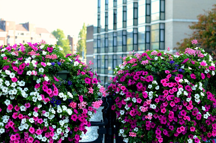 DSC_9665 Flowers on a Amsterdam bridge