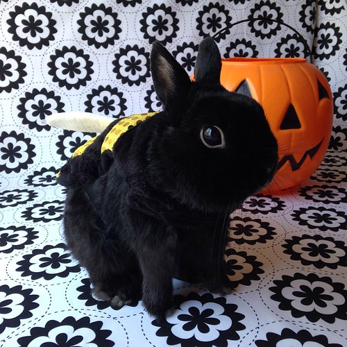 Happy Halloween! I give you one bunny bumble bee!#georgebunny #bunstagram