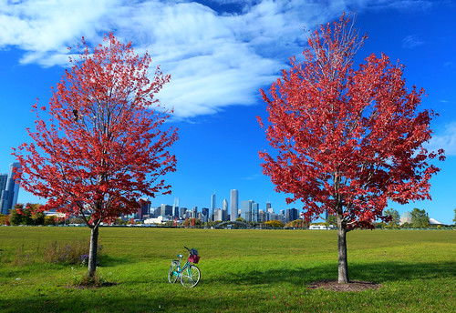 blue autumn red chicago color green fall colors leaves bike bicycle skyline lowresolution colorful fallcolor searstower lakemichigan fallfoliage foliage filter lakeshore polarizer cpl redleaves chicagoskyline autumncolor polarizingfilter polarizing northerlyisland redfoliage explored chicagonature willistower photoshoptouch northerlyislandpark accidentallylowresolution