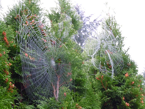 Spiderweb Season