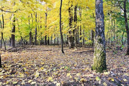 "wood tree nature landscape nikon ukraine nikkor pastoral epic v1 vadim nationalgeographic autofocus beldy greatphotographers pastorallandscape nikon1 1v1 nikkor10mmf28 platinumheartaward nikonone nikonpassion nikonflickraward ""nikonflickraward"" nikon1v1 nikonv1 pastoralcolours vadimbeldy"