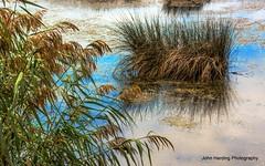 Sea Oats and Sea Grass
