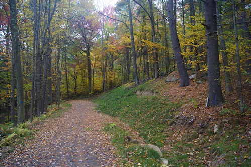 grater-woods-DSC03879