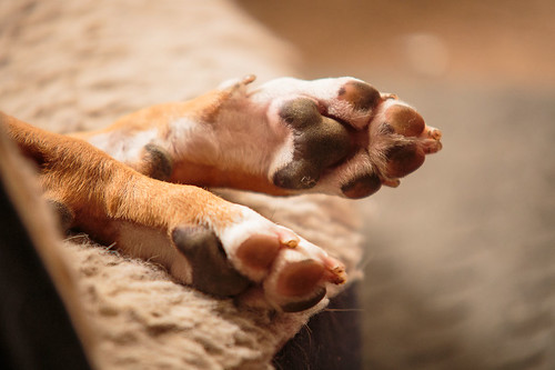 Feet-8945