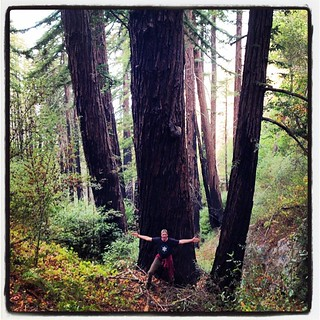 Stand of redwood. Huge. Nature is a wonder. #airstreamdc2cali #california #redwood