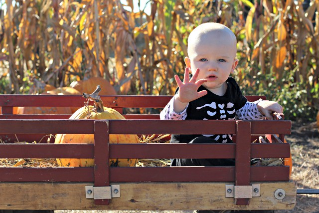 Pumpkin patch leo wave
