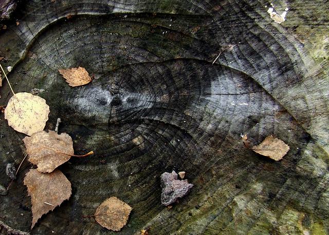 stump 2