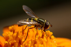 insects-10-25-2014-46.jpg