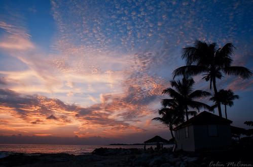 ocean trees sunset sea sky netherlands dutch saint st martin sint tropical caribbean maarten sxm antilles