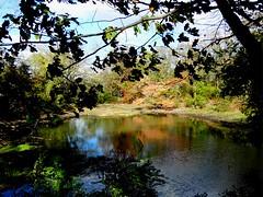 Forest City Community Park (9)