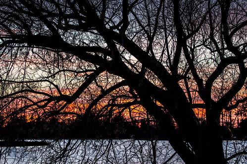 tree canon t2i beaverton ross lake autumn cold water sun sunset aman atardecer sol ef70200mmf4lusm michigan park midland