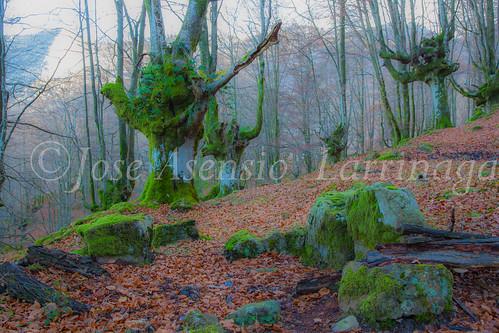 Parque Natural de Gorbeia #DePaseoConLarri #Flickr -2846