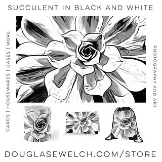 Succulent in Black and White Cards, Housewares, Bags and More from Douglas E. Welch #products #cards #bags #clothing #cases #technology #housewares #arts #crafts #blackandwhite #sketch #drawing #succulent #garden #plants #nature