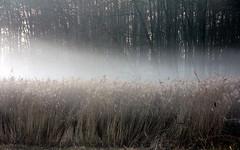 mist over reeds