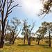 Australian bush at sunny day