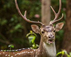 animal, antler, deer, horn, fauna, wildlife,