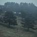 Woods of Fog by Elisa Imperi