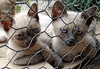 Macedonia, kittens' melancholia, Mount Athos, Greece #Μacedonia by gentle wolf