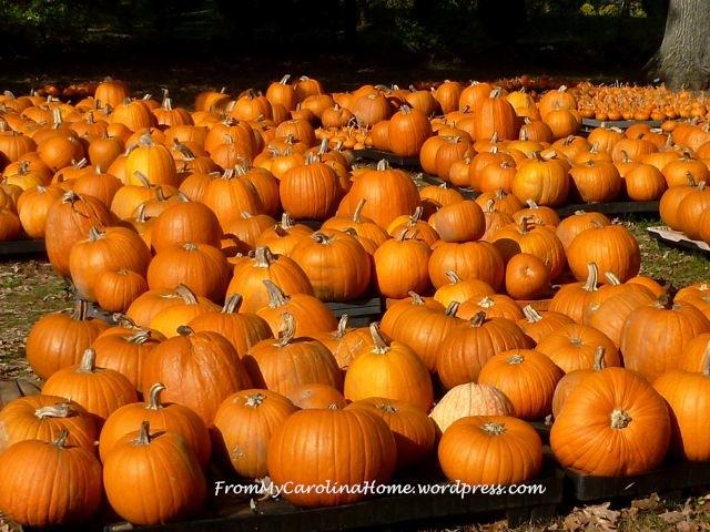Pumpkins2014-1