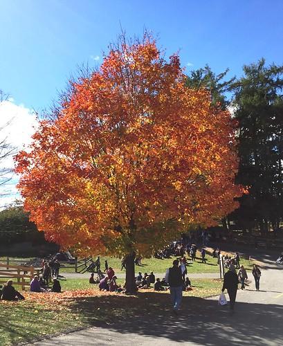 Ubiquitous Tree