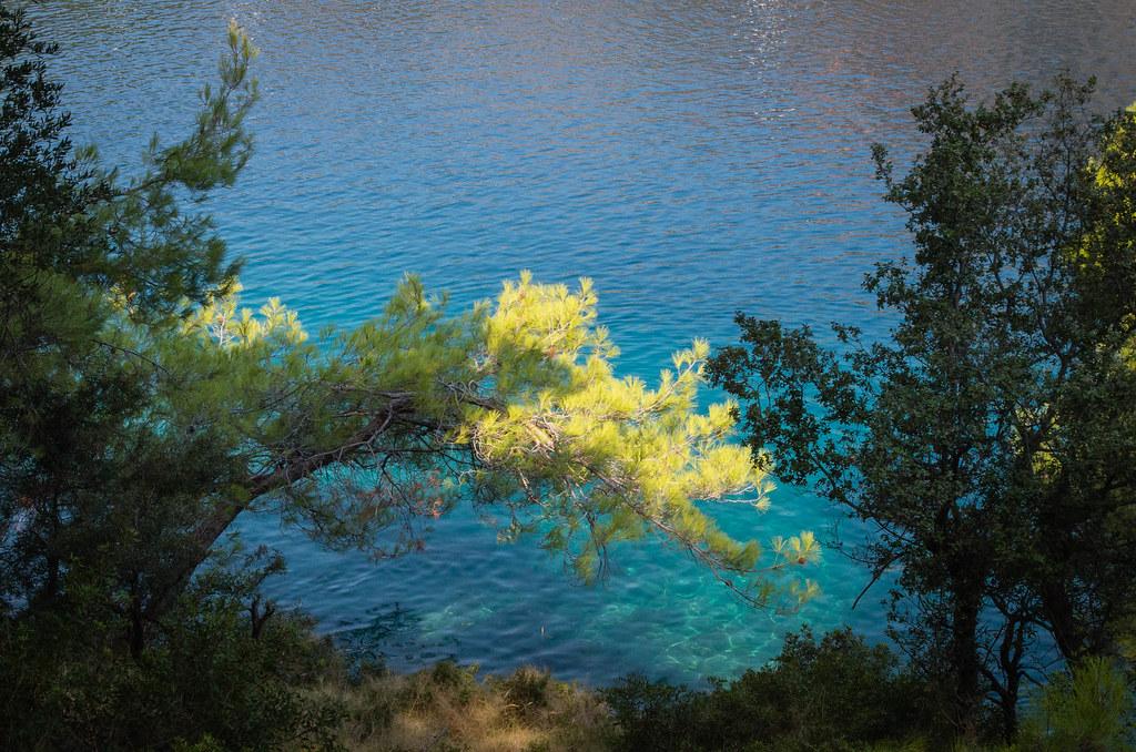 Branche : Reflet du Soleil dans l'Eau et le Branchage