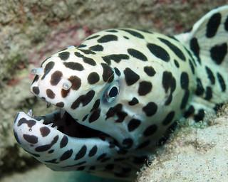 "<img src=""padi-diving-salang-jetty-tioman-island-malaysia.jpg"" alt=""PADI diving, Salang Jetty, Tioman Island, Malaysia."" />"
