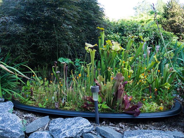 Bog Garden 1