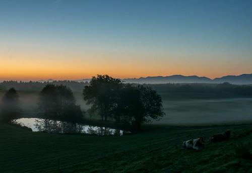 morning light mist mountains alps tree berg fog sunrise licht kuh cow pond nebel berge alpen teich bäume morgen baum 2014 pfaffenwinkel dorenawm nex7 oppenried renatedodell