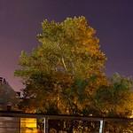 Gyhíd Fa és Ősziek M31