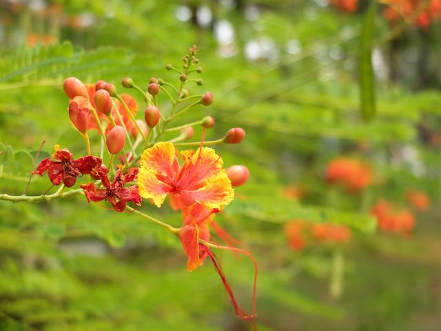 flower bokeh