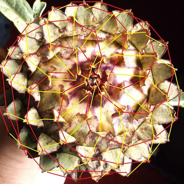 DSCF1373 fibonaci
