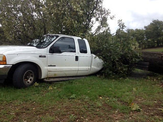 Picture of a truck crushed by a tree