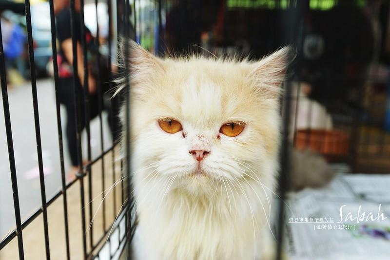 等待買家的貓@假日市集Gaya Street~Sunday Market