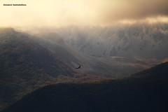 空と森の間 - Tra i boschi ed il cielo