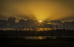 Sunny Side Up.........
