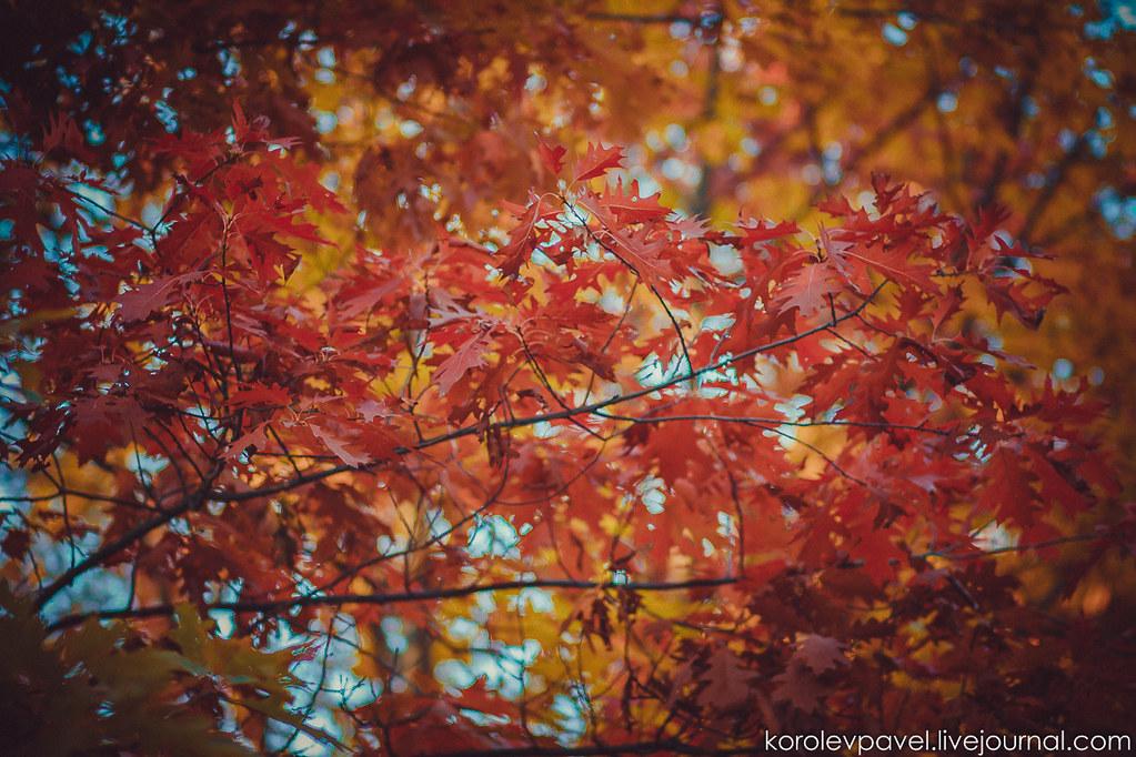 Autumn-194