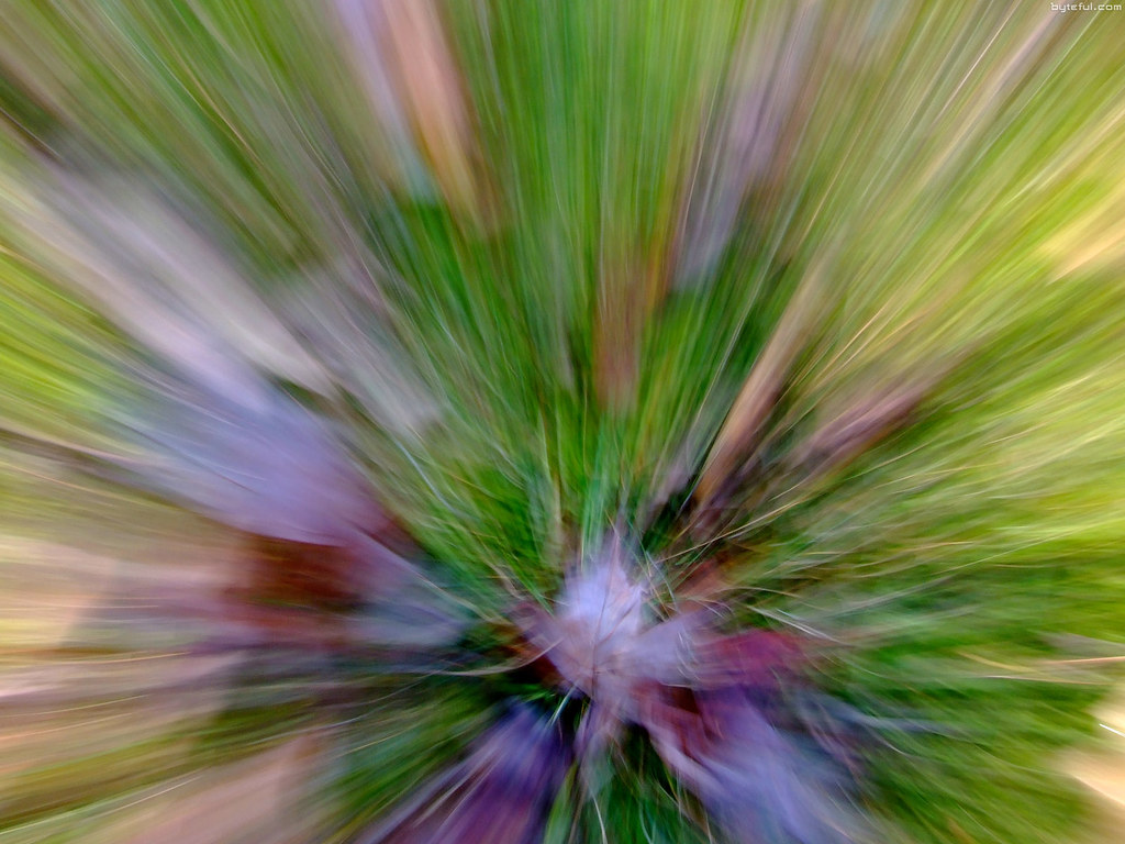 Camera Dashing In The Abstract Forest Photos Aravinda Loop